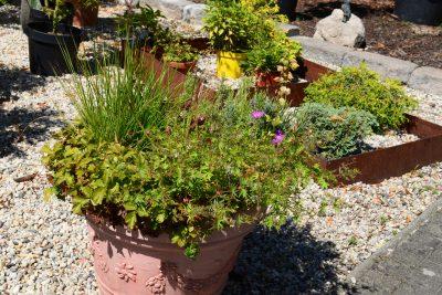 Großer Blumentopf mit vielen Kübelpflanzen