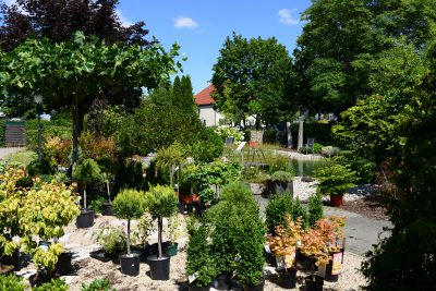 Verkaufsgarten mit vielen Saisonspflanzen