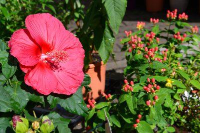 Frisch bewässerte Blume